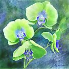 Orchids One  by Joan A Hamilton