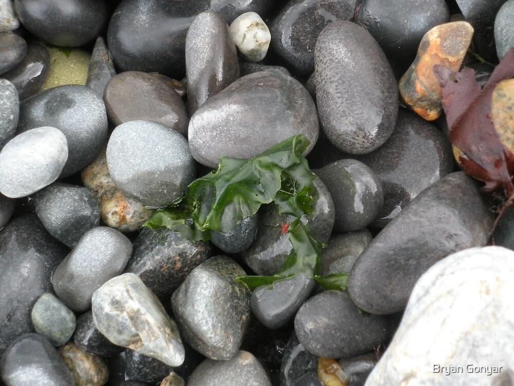 Pebble Beach by Bryan Gonyar