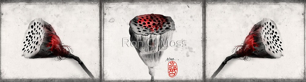 Lotus Seed Pods by Ron C. Moss