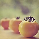 tomatoes.. by Michelle McMahon