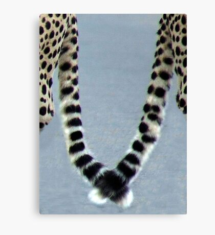 UP CLOSE AND PERSONAL WITH CHEETAH'S - CALENDAR Canvas Print