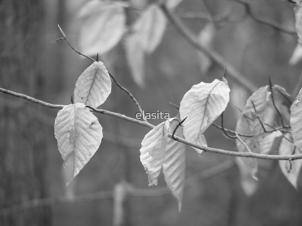 Remember Autumn? by elasita