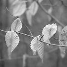 Nature in Black & White  by elasita
