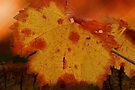 Autumn Leaf in the Vineyard by Eve Parry