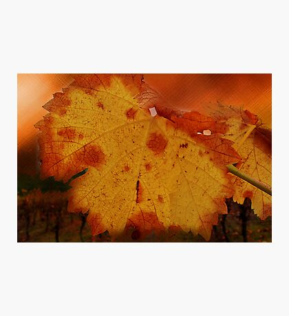 Autumn Leaf in the Vineyard Photographic Print