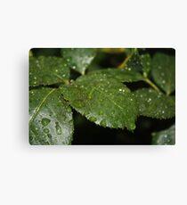 Leaf Macro Canvas Print