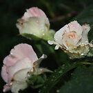 Flower Macro by Stephen Horton