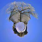 Farm by Tim Wright