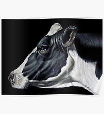 Holstein Friesian Dairy Cow Portrait Poster