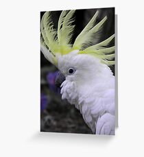 Sulphur Crested Cockatoo - Science Park, South Australia Greeting Card