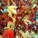 My True Love, Autumn... by Christopher Nicola