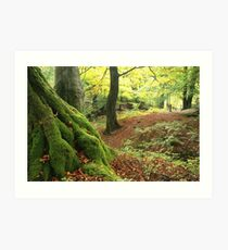 Mossy tree trunk Art Print