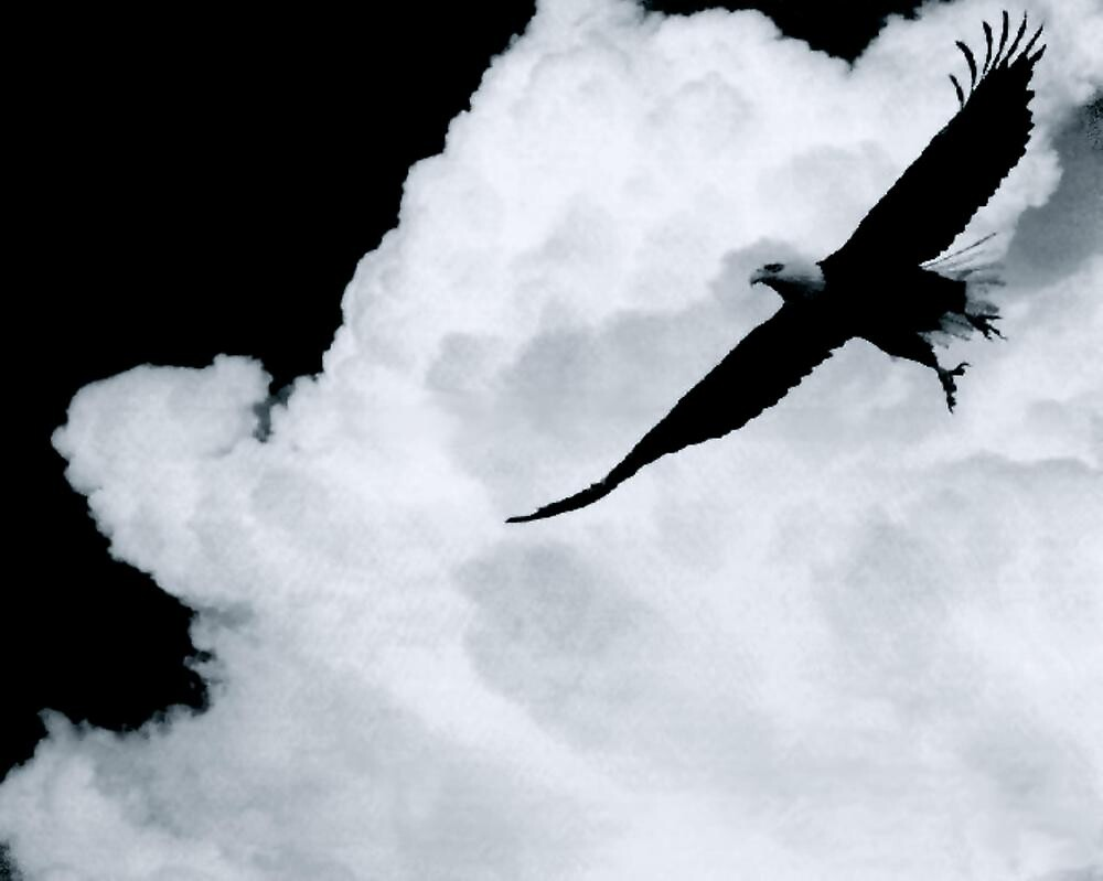 EAGLE...HIGH IN THE CLOUDS by RoseMarie747