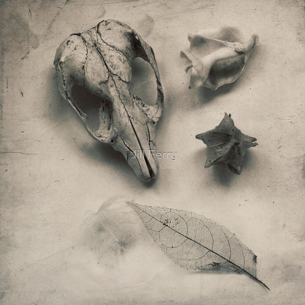 Objects by Jill Ferry
