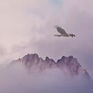 Peregrine Falcon by Alex Preiss
