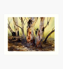 River Red Gum, Flinders Ranges, South Australia Art Print