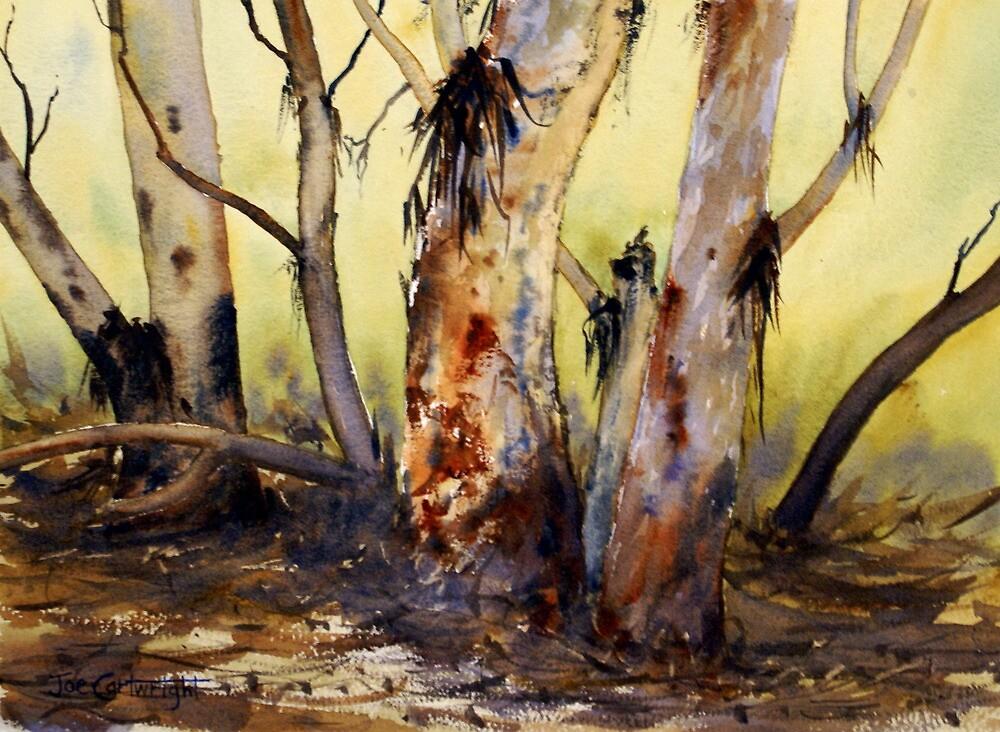River Red Gum, Flinders Ranges, South Australia by Joe Cartwright