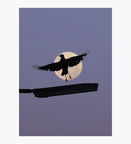 Magpie Moon Photographic Print
