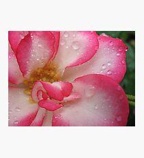 Amusing rose Photographic Print