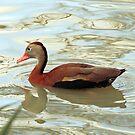 A Duck's LIfe by SuddenJim