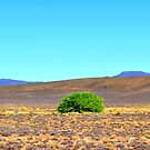 Wishing Tree by Karen01