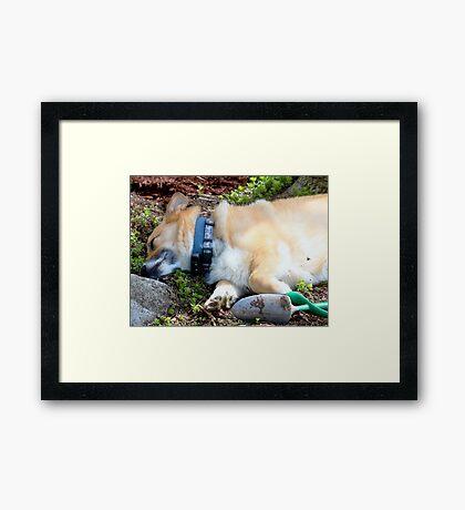Now THAT'S Cute ( For Steve) Framed Print