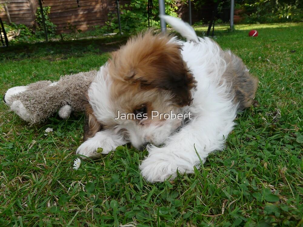 Playful Puppy by James Probert