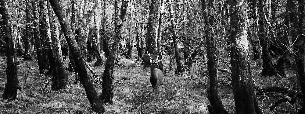 Spot the deer by Paul McSherry