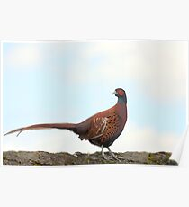 I am not a Pheasant Plucker  Poster
