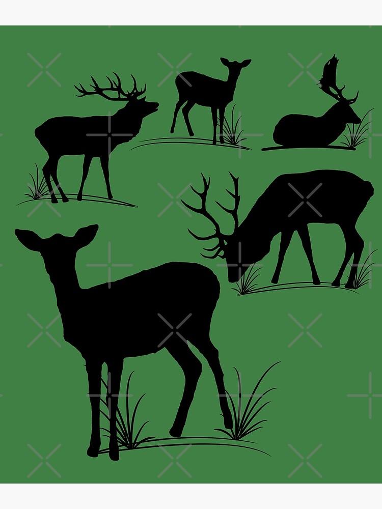 Hirsch, Reh, Rotwild, Damwild, Tiere, Hirsche, Rehbock, Jagd, Geweih von rhnaturestyles