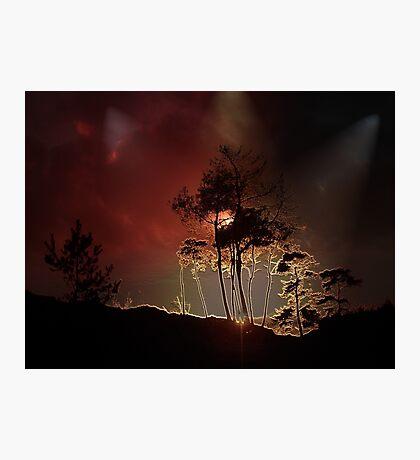 Almost Night Trees Photographic Print