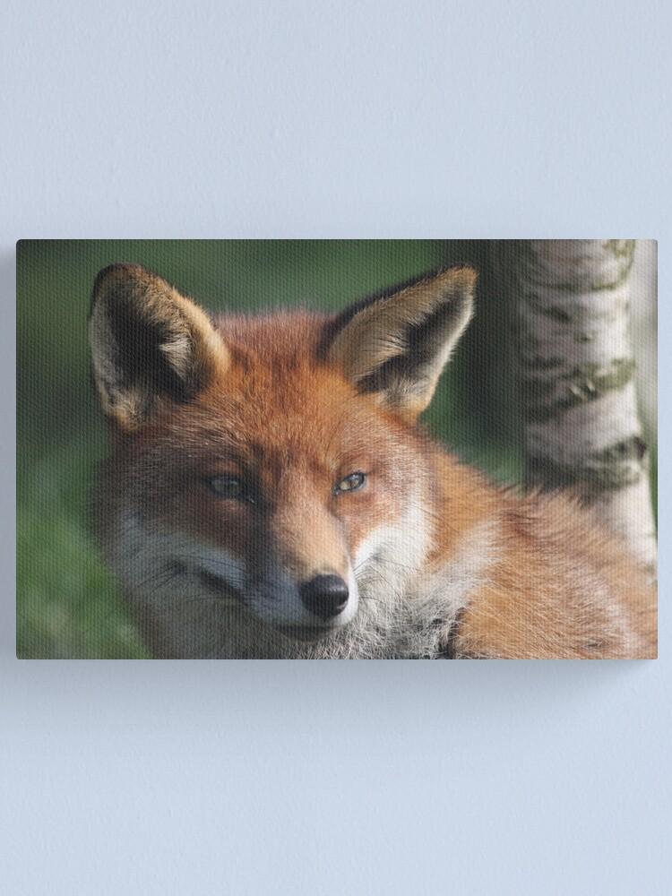 Alternate view of Fox stare Canvas Print