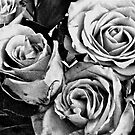 Anniversary Roses by Christopher Clark