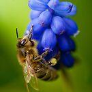 hmmm honey by jaffa