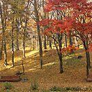 Autumn in the park by Elena Skvortsova