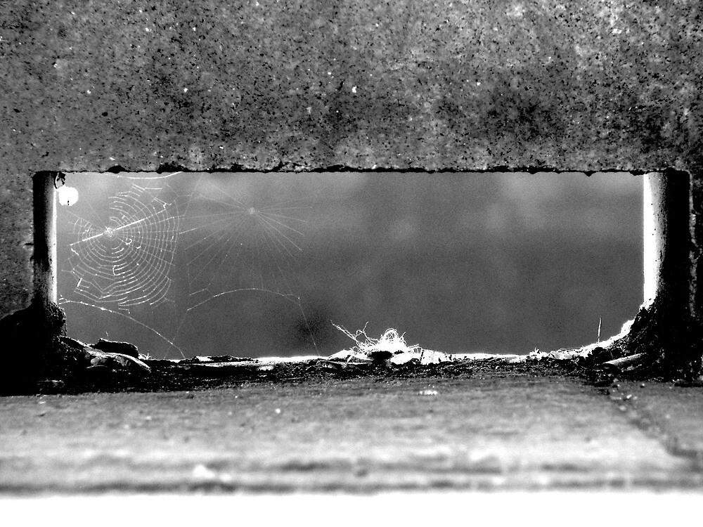 Nooks and crannies and cobwebs by Katarina Kuhar