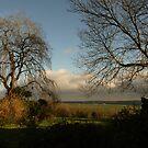 Garden Views by moor2sea