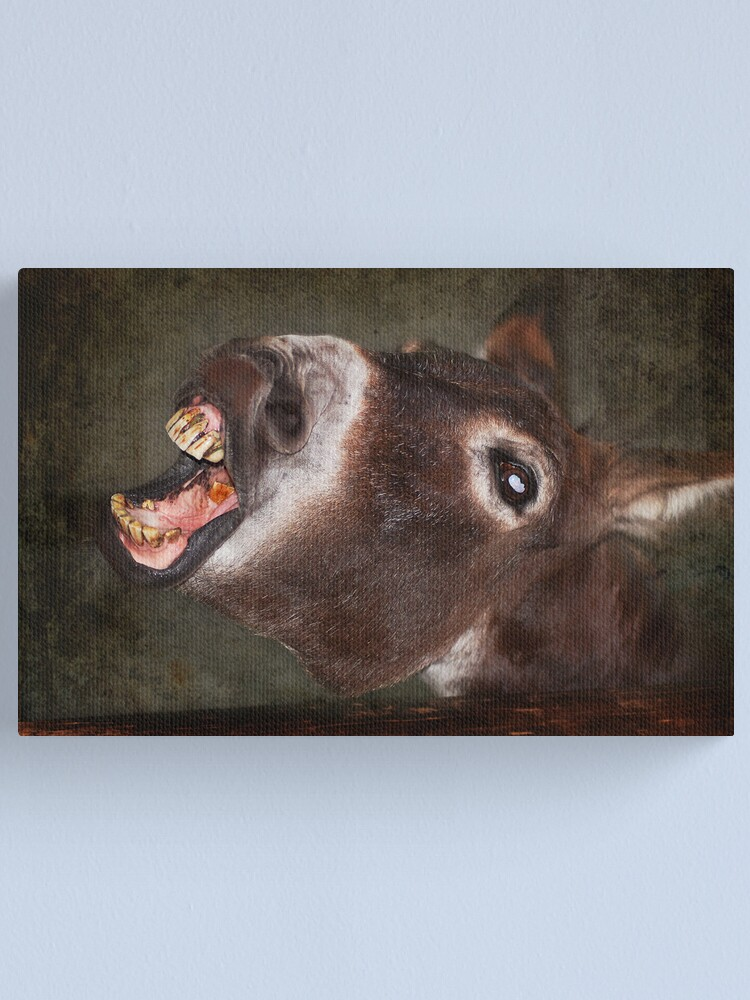 Alternate view of Quit Smoking! or have teeth like mine Canvas Print