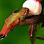 HUMMINGBIRD FEEDER by RoseMarie747