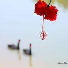 """ Red Lantern "" shines my way by Brian Bo Mei"