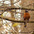 Wild Red bird! by vasu