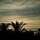 Evening Palm Trees by Michael Garson
