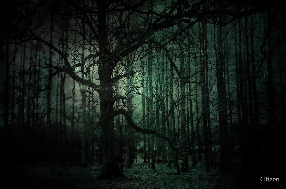 Emerald Forest by Nikki Smith (Brown)