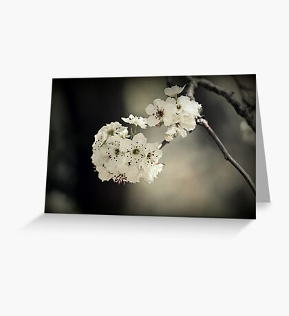 Spring Blooming Greeting Card