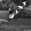 Cranes Fly... by Cari Jo Blain