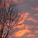 Orange Sky by Marie Brown ©