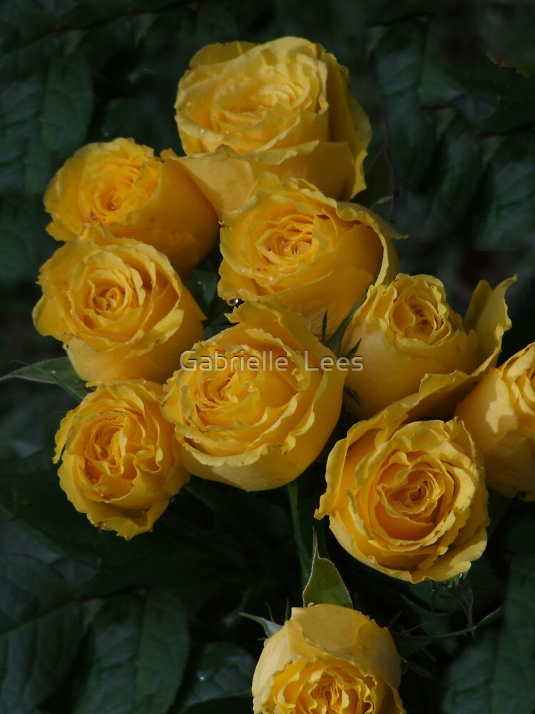Some Roses for You! by Gabrielle  Lees