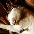 Glorious Sleep by Ladymoose