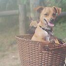 Puppies in the Mist by Brandie1