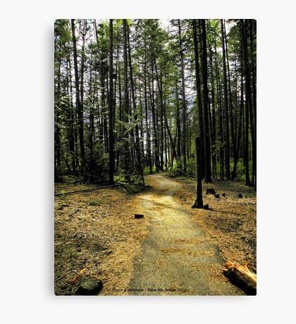 Kootenai Falls Trail Canvas Print